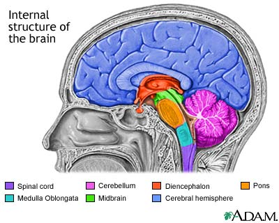Older brain structs julia dovgy leave a reply cancel reply ccuart Images